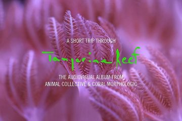 Animal Collective - A Short Trip Through Tangerine Reef